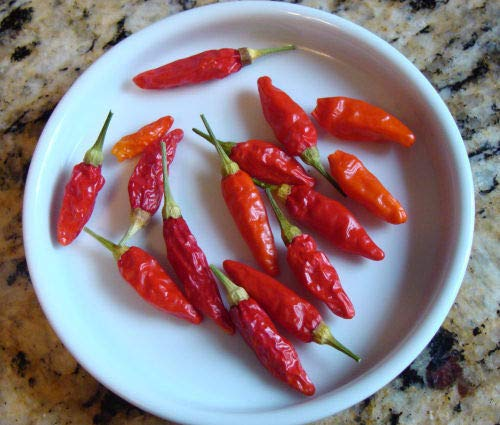 Portal Cool Pfeffer Tabasco Spicy 100 Samen Samen Pfeffer