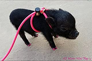 mini pig harness and leash