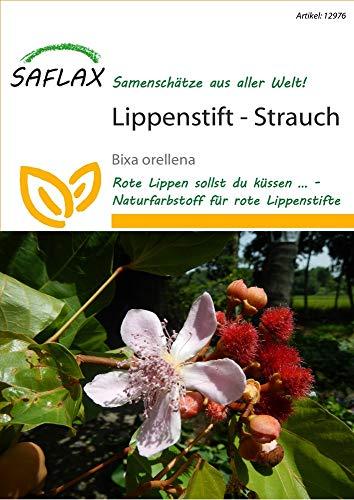 Saflax 12976 Lippenstift-Strauch (Lippenstift-Strauchsamen)