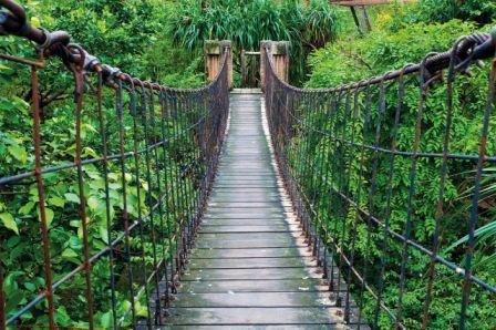 GREAT ART XXL Póster – Puente Colgante – Decoración Mural Selva Paisaje Naturaleza Aventura Puente Selva Bosque Puente De Madera Cartel Bosque Verde (140 X 100 cm)