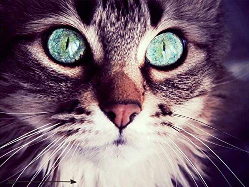 Cuadro de diamantes de gato con imagen de diamantes de imitación de animales, Kit de artesanía de mosaico, decoración del hogar, Kit de bordado de diamantes hecho a mano 5D A10, 50x70cm