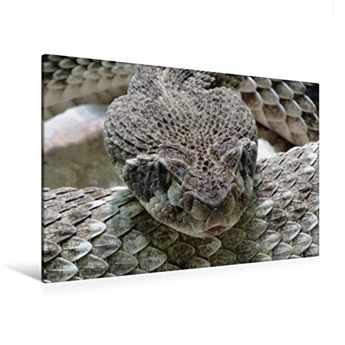 CALVENDO Premium Textil-Leinwand 120 cm x 80 cm quer, Klapperschlange | Wandbild, Bild auf Keilrahmen, Fertigbild auf echter Leinwand, Leinwanddruck: Schlangen und Giftschlangen Tiere Tiere