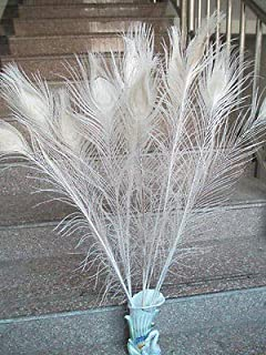 Best peacock feather buttonholes Reviews