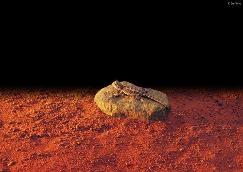 Exo Terra Heat Wave Rock, elektronischer Wärmestein klein, 5 Watt - 2