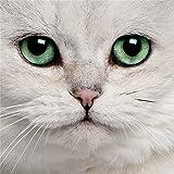 Erwachsene 1000 Teile Puzzle Spielzeug Haustier Katze Tierbild Früherziehung Spielzeug flacher Bereich Holz Lernspielzeug A.8 1000pcs