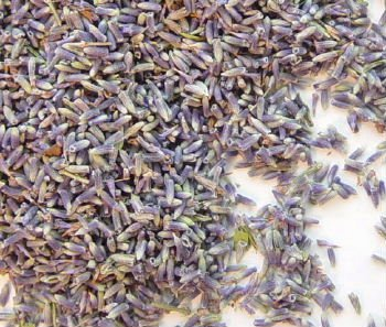 Lavender Flower Buds #1 - Uses - Culinary & Crafting - 2oz Bag