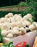 Risitar Graines - 50pcs Rare champignon Blanc de Paris, Graines de légumes jardin plante vivace résistante au froid