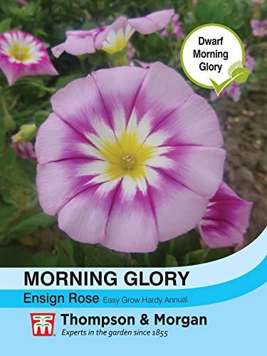 Thompson & ‿Morgan – Flower – Morning Glory Ensign Rose – 180 graines