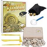 JustPe Kit de Excavación de Mega Piedras Preciosas Naturaleza Geométrica 5 Gemas Reales con Kit de Excavación Incluye Perla Fósil Espada Minerales de Arqueología de La Ciencia de Tallo