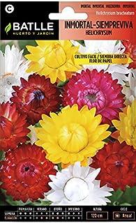 comprar comparacion Semillas de Flores - Inmortal Siempreviva Flor de Papel variada - Batlle