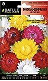 Semillas de Flores - Inmortal Siempreviva Flor de Papel vari