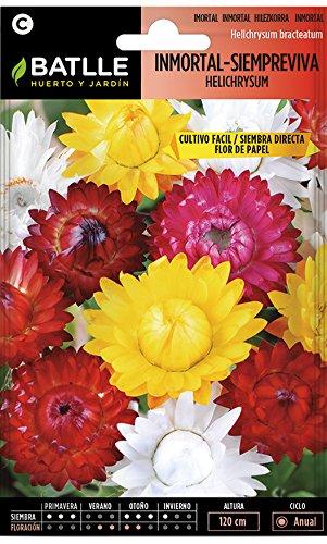 Semillas de Flores - Inmortal Siempreviva Flor de Papel variada - Batlle