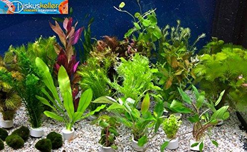 Diskuskeller Wasserpflanzen Set 15 gemischte Bunde/Aquariumpflanzen + Mooskugel gratis/Aquarienpflanzen Sparpaket