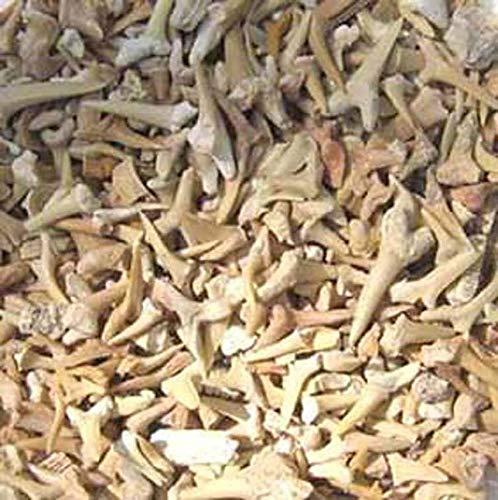 Edel-Depot Fossile Haizähne und weitere fossile Teile, 200 g. (1 kg = 77,00 EUR)