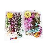 Flores Prensadas Secas 2 cajas de flores secas naturales mezcladas flores prensadas reales coloridas ramas florales arreglos de flores para arte de resina DIY color al azar