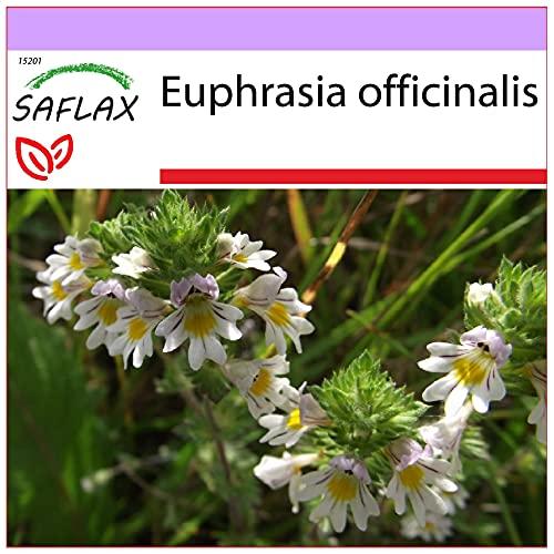 SAFLAX - Eufrasia officinale - 200 semi - Euphrasia officinalis