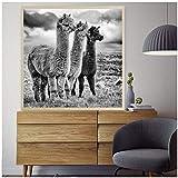 LYFCV Mode Schwarz und Weiß Lama Poster Tier Leinwand
