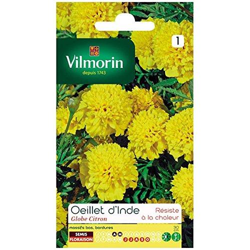 Vilmorin - Oeillet d'inde Globe Citron