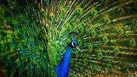 孔雀のカラフルな羽青動物自然ポスターキャンバスプリントポスターウォールアート装飾ベッドルームリビングルームのための(非画線