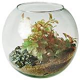 Aquarium Boule Zolux 4 litres