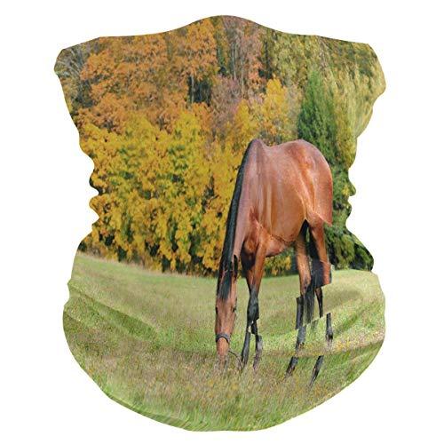 Duang Bandanas Paard Afbeeldingen Werk Hals Gaiter Ademende Bandanen Buiten 25X50Cm Gezicht Cover Zachte Sport Fietsen Camping Wandelen Gezellige School Unisex