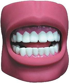 QIQIZHANG Anatomiemodel, tandenonderwijsmodel menselijk verwijderbaar tandverzorgingsmodel met 32 tanden, functies van het...