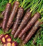 Las semillas de zanahoria púrpura cósmicos extra dulces Gourmet gran mercado o en el hogar Jardineros (200 semillas con seguimiento)