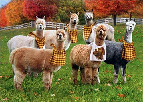 Avanti Alpacas with Napkins Funny/Humorous Thanksgiving Card
