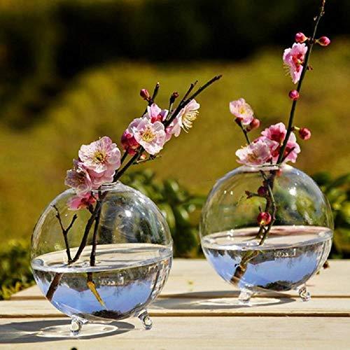 Gbcyp Vase 10cm Klare Kugel Glasvase Terrarium Hydroponische DIY Garten Dekor Blume Transparente Glasvase