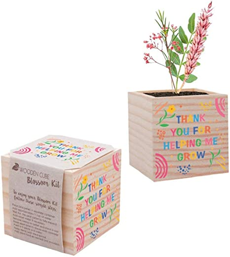 Cheersville Desk Plant for Office or Classroom Decor - Growing Kit - Teacher Appreciation Plant Cube (Wildflower)
