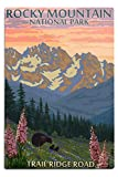 Lantern Press Rocky Mountain National Park, Colorado, Trail Ridge Road, Bear and Spring Flowers 97817 (12x18 Aluminum Wall Sign, Metal Wall Decor Ready to Hang)