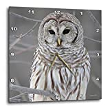 3dRose Barred Owl Wall Clock, 10 by 10-Inch