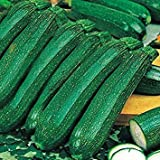 Shop Meeko Kings Seeds - zucchine Ambasciatore F1-15 Semi