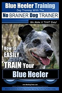 tips for training a blue heeler