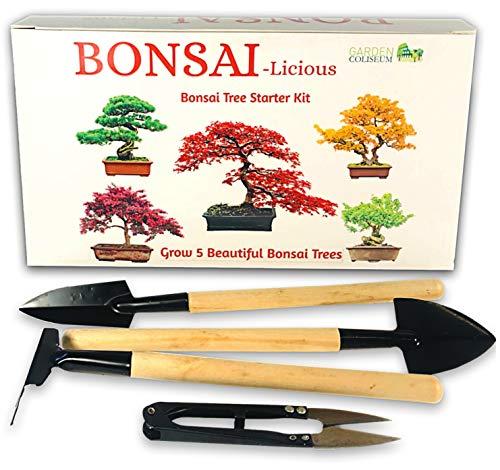 Kit de plantación de bonsáis - Planta tus propios bonsáis - Set de regalo de cultivo - Fertilizante de bonsáis Incluido. - Kit de principiante con 5 semillas de 5 especies diferentes para sembrar