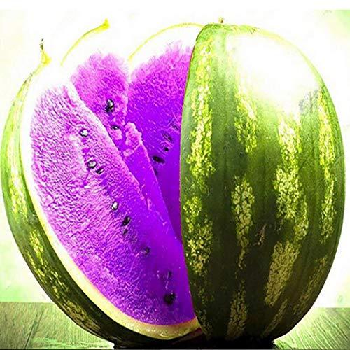 Ultrey Samenshop - 10 Stück Seltene Wassermelone Samen zuckersüss Melonen Essbar mehrfarbig Früchte und Obst Samen 5 Farben für Garten Balkon/Terrasse