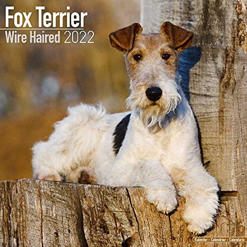 Fox Terrier Wirehaired - Drahthaar Foxterrier 2022 - 16-Monatskalender: Original Avonside-Kalender [Mehrsprachig] [Kalender]: Original BrownTrout-Kalender [Mehrsprachig] [Kalender] (Wall-Kalender)