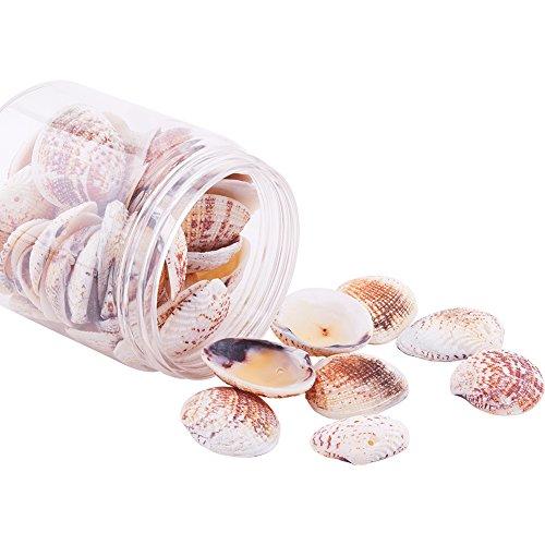 PandaHall 50 Stück Natürlichen Muschel Perlen Deko Muscheln zum Basteln