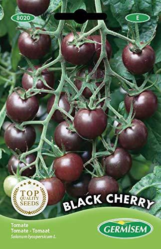Germisem Black Cherry Tomate 20 Semillas (EC8020)