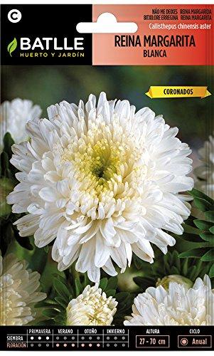 Semillas de Flores - Reina Margarita Blanca - Batlle