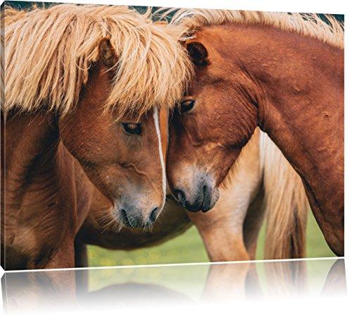 zwei schmusende Pferde, Format: 80x60 auf Leinwand, XXL riesige Bilder fertig gerahmt mit Keilrahmen, Kunstdruck auf Wandbild mit Rahmen, günstiger als Gemälde oder Ölbild,...