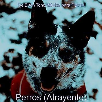 Perros (Atrayente)