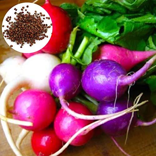 150 Unids/Bolsa Semillas De Zanahoria Jugoso Delicioso Nutritivo Color Mixto Rábano Vegetal Semillas De Plantas Al Aire Libre Semillas de zanahoria