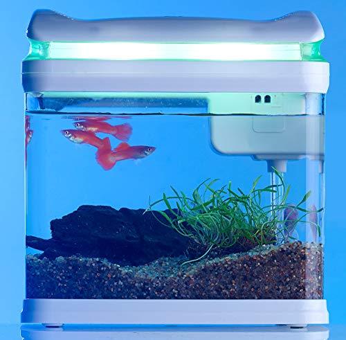 Sweetypet Aquarium: Transport-Fischbecken mit Filter, LED-Beleuchtung und USB, 3,3 Liter (Aquarium-Set) - 5
