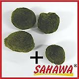 Mooskugeln im Set 3-5 cm, Cladophora aegagropila, Cladophora-Ball , Marimo, Algenball, Wasserpflanzen von SAHAWA (Set 1 (3+1))