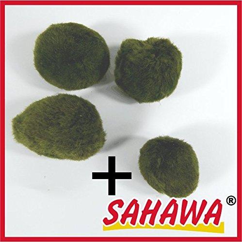 Mooskugeln im Set 3-5 cm, Cladophora aegagropila, Cladophora-Ball , Marimo, Algenball, Wasserpflanzen von SAHAWA® (Set 1 (3+1))