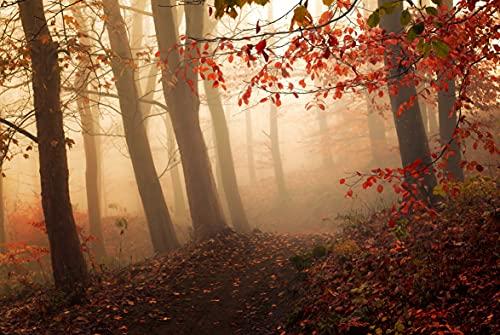 WALD 6179A - Papel pintado fotográfico (fieltro, 350 x 260 cm), diseño de paisaje natural, árboles, niebla y bosque otoñal