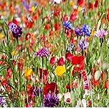 1Kg Pure Wildflower Meadow Certified Seeds Over 20 Species of Flower Buy 2 Get 1 Free, Amazing Value