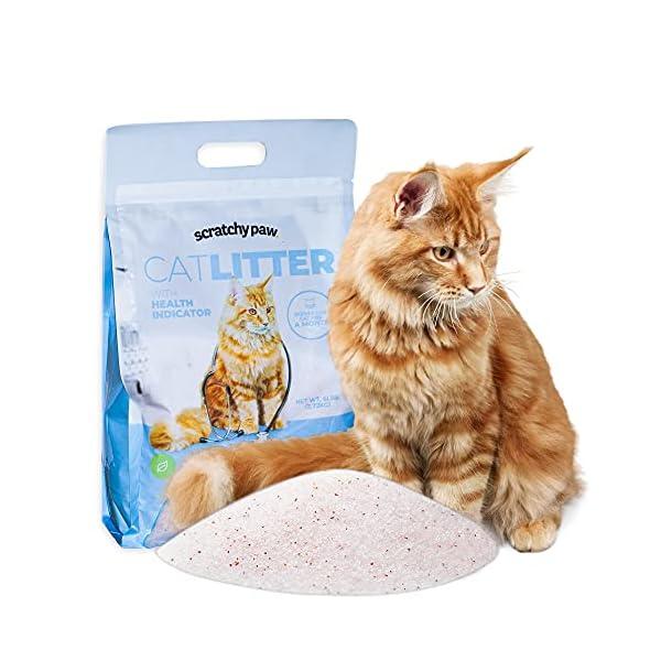 Cat Litter for your Cat litter box
