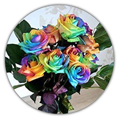 Regenbogen Rose/Bunte Rose/ca. 50 Samen/Rosensamen/Geschenk für Verliebte/Geburtstagsgeschenk
